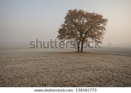 Autumn misty morning - stock photo
