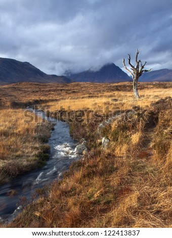 Autumn Moor - stock photo