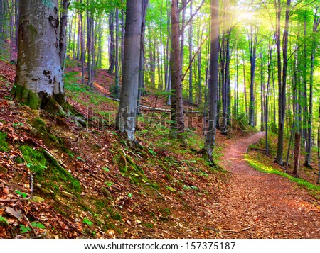 Autumn morning in mystical woods - stock photo