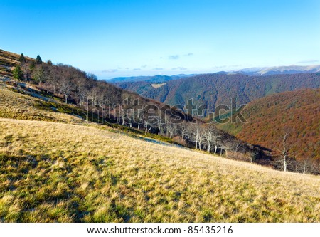 Autumn mountains  with a stark bare trees on forest edge in front (Carpathian, Ukraine). - stock photo