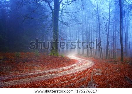 Autumn mysterious forest with road. - stock photo