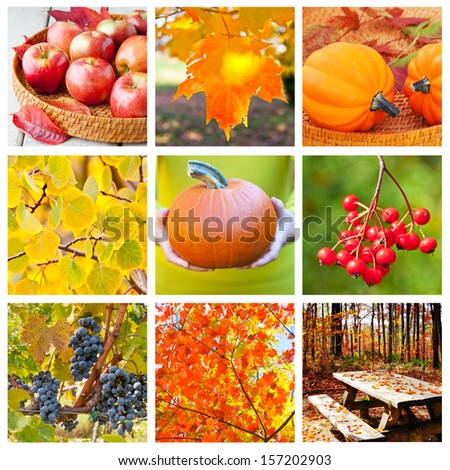 Autumn nature collage, collection of beautiful seasonal images. - stock photo