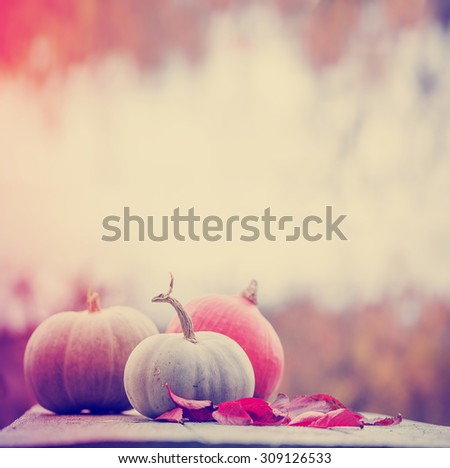 Autumn nature concept. Fall pumpkins and apples on wooden rustic table. Thanksgiving dinner - stock photo
