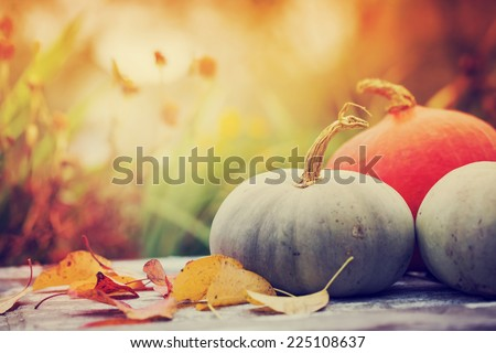 Autumn nature concept. Fall punpkins and apples on wooden rustic table. Thanksgiving dinner - stock photo