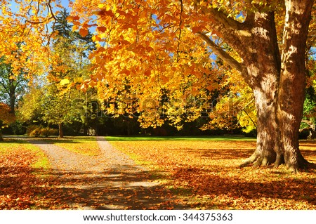 Autumn nature, fall tree background - stock photo