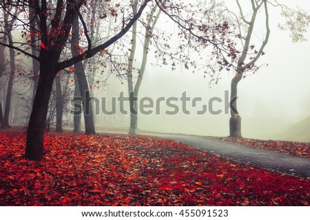 Autumn nature -foggy autumn view. Autumn alley in dense fog - foggy autumn landscape with bare autumn trees and red fallen leaves. Autumn alley in dense autumn fog. Soft focus applied. - stock photo