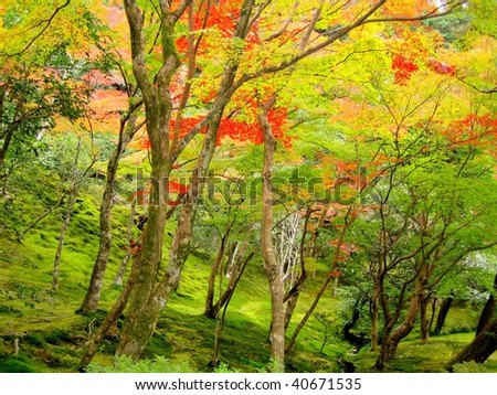 Autumn nature, Ginkakuji (Silver Pavilion) gardens in Kyoto, Japan - stock photo