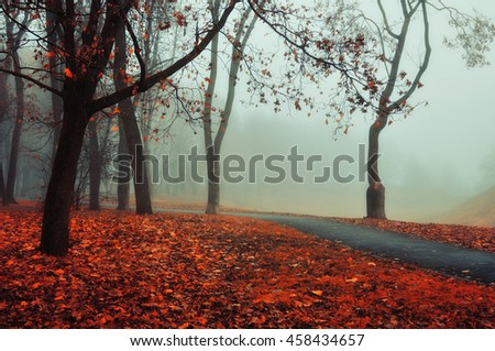 Autumn nature -misty autumn view of autumn park alley in dense fog - foggy autumn landscape with bare autumn trees and orange fallen leaves. Autumn alley in dense autumn fog. Soft filter applied. - stock photo