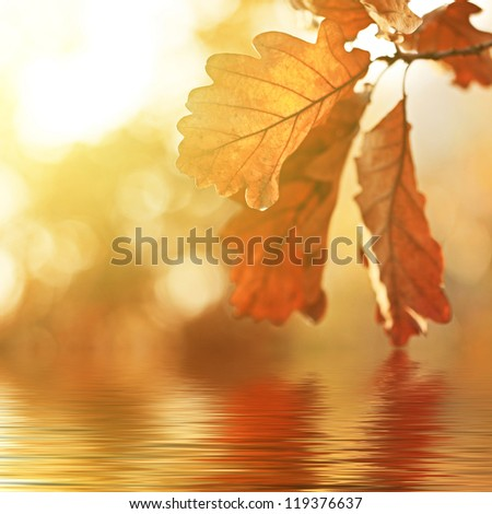 Autumn oak leaves over water. Natural background. - stock photo