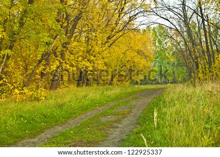 Autumn or fall design background trees backdrop in the late colorful afternoon during sunset - stock photo