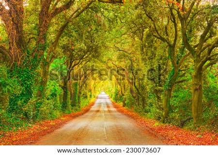 Autumn or fall, trees tunnel road on sunset. Maremma, Tuscany, Italy Europe. - stock photo