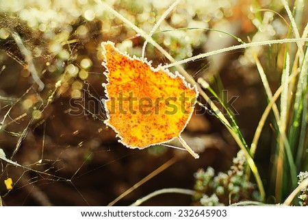 Autumn orange iced leaf in a web, natural fall vivid background - stock photo