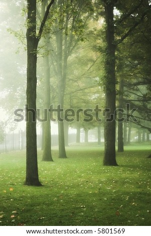 Autumn park or forest with fog and leaves on ground - stock photo