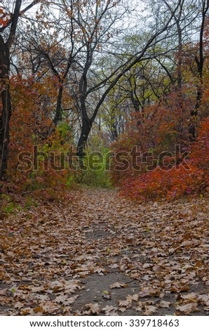 Autumn path in a park strewn with leaves - stock photo