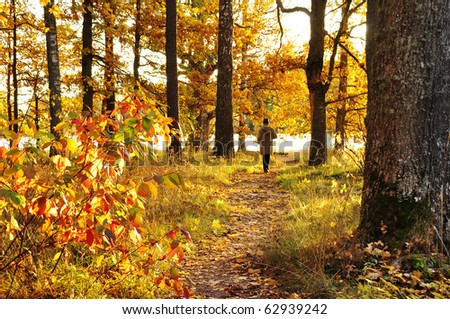 Autumn path in sunrise - stock photo