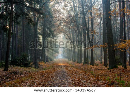 Autumn path with sunbeams in the forest - stock photo