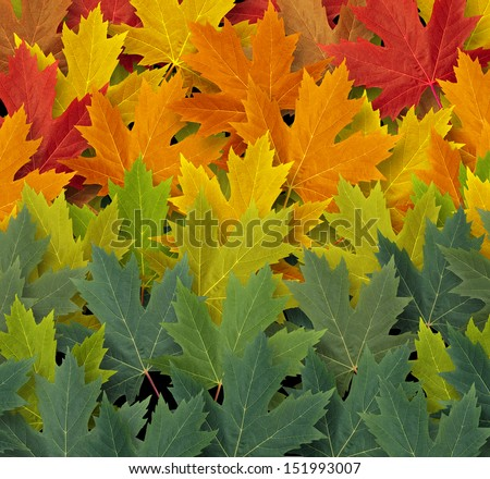 Autumn pattern background as a seasonal concept and an icon of nature and the fall weather with a gradating group of red yellow and green leaves representing the coming cool weather of harvest time. - stock photo