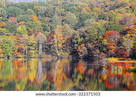 Autumn pond Scenery ~ Protected wetlands bathed in golden light and autumn foliage reflected on water at Kagami Ike ( Mirror Pond ), as beautiful as Tsuta marsh, Towada Hachimantai, Aomori, Japan - stock photo