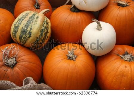 Autumn pumpkin and gourd display. - stock photo