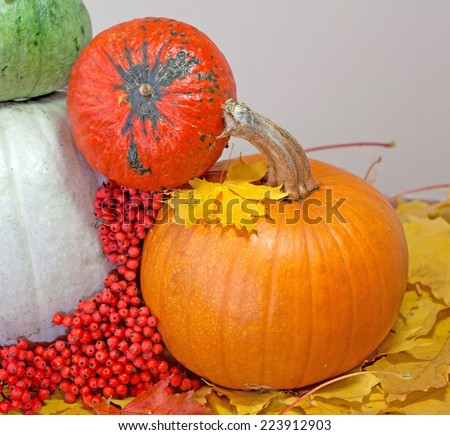 autumn pumpkins composition, day lighting - stock photo
