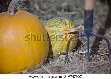 Autumn pumpkins in the hay, pitchfork next - stock photo
