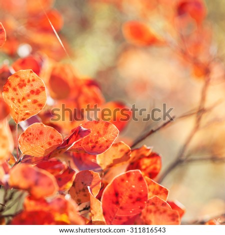 Autumn red leaves in sunlight - stock photo