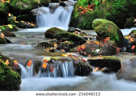 Autumn river with yellow leafs - stock photo