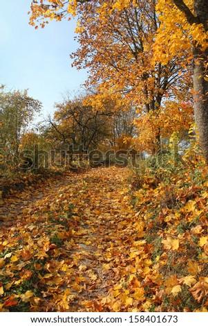 autumn road - stock photo