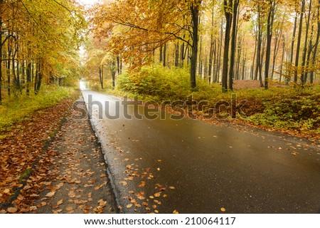 Autumn road in north Poland - stock photo