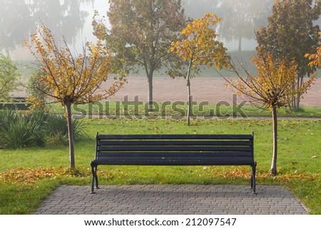Autumn sakura trees and bench - stock photo