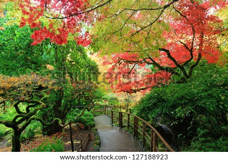 autumn scene of Japanese maples in Japanese Garden of the national historical site Butchart Gardens, Vancouver island, British Columbia, Canada - stock photo