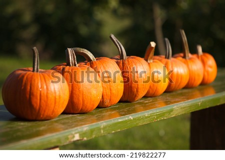 Autumn scene with pumpkins in garden - stock photo