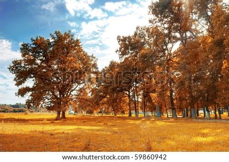 Autumn scenery. Beautiful gold fall in park. - stock photo