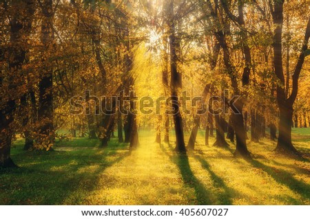 Autumn scenic landscape - autumnal forest lit by sunlight breaking through the tree branches. Soft focus processing - stock photo