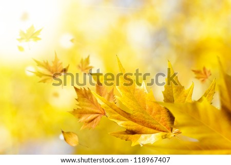 Autumn seasonal background. Abstract fall season concept with golden leaves flying on air. Wind blowing on nature. - stock photo