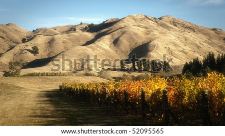 Autumn shot of Cloudy Bay vineyard in Marlborough New Zealand - stock photo