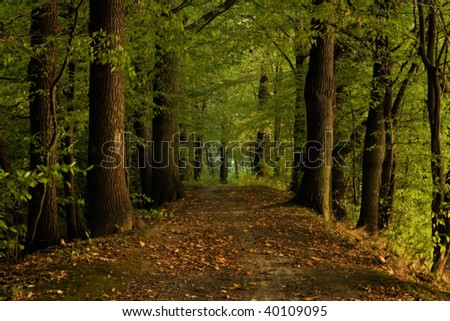 Autumn shot of pathway in forrest - stock photo