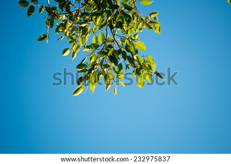 Autumn sky - stock photo