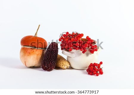 Autumn Still Life pumpkin corn viburnum isolated on a white background - stock photo