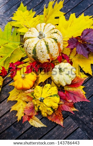 autumn still life with pumpkins - stock photo