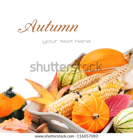 Autumn still-life with pumpkins and corn isolated over white - stock photo