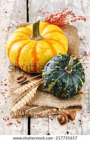Autumn still-life with pumpkins in rustic setting  - stock photo
