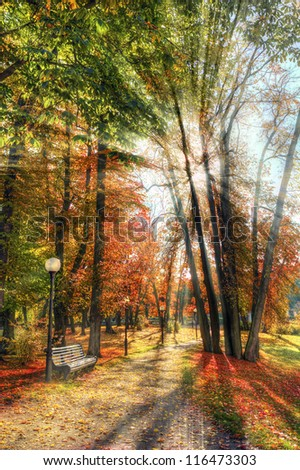 Autumn sun rays - stock photo