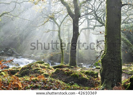 autumn sunlight breaks through the trees. - stock photo