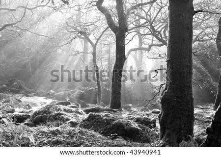 autumn sunlight breaks through the trees. - stock photo