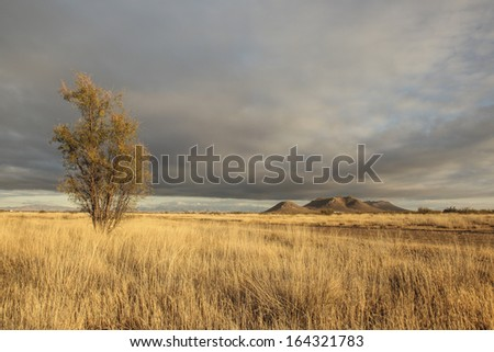 Autumn sunlight on golden dry prairie with tall mesquite tree, distant hills and gray sky/Autumn Dry Grassland with Tall Mesquite Tree and Cloudy Gray Sky/Dry prairie, tree, hills and cloudy gray sky - stock photo