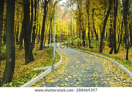 Autumn sunny park with yellow trees and road, natural seasonal background - stock photo