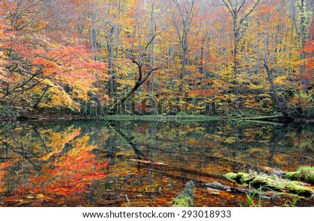 Autumn Swamp Scenery. Protected wetlands bathed in golden light and colorful autumn foliage. In Tsuta marsh, Towada, Aomori, Japan - stock photo
