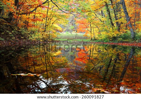 Autumn swamp scenery with beautiful fall foliage reflected on smooth water ~ Protected wetlands bathed in golden light in Tsuta marsh, Towada Hachimantai National Park, Aomori, Japan. - stock photo