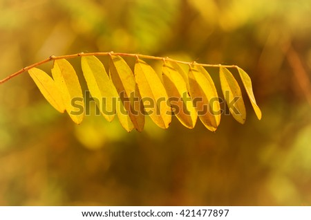 Autumn tree branch with yellow leaves, natural fall vivid sunny background - stock photo